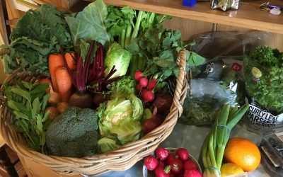 Fermenting our Food for Wellbeing
