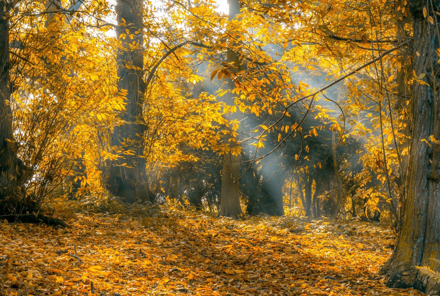 autumn-autumn-leaves-branch-531857